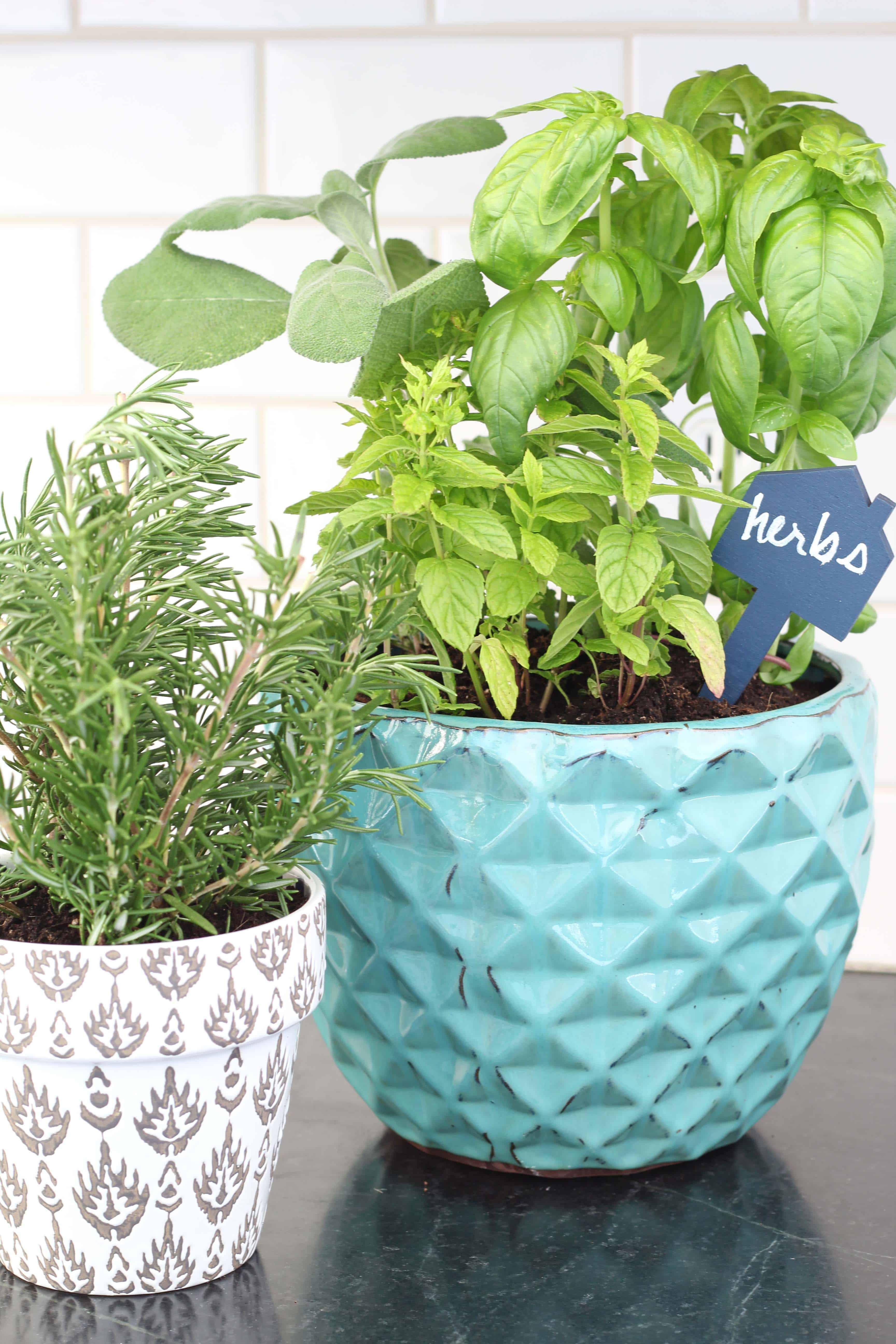 Tips For A Kitchen Herb Garden | A Nod to Navy