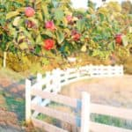 How to Plan A Day Apple Picking + An Apple Tart Recipe
