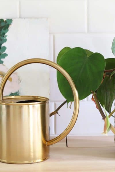 My Favorite Ways To Decorate With Plants